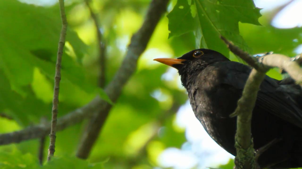 Vingar och näbbar – vårfåglar (fakta)