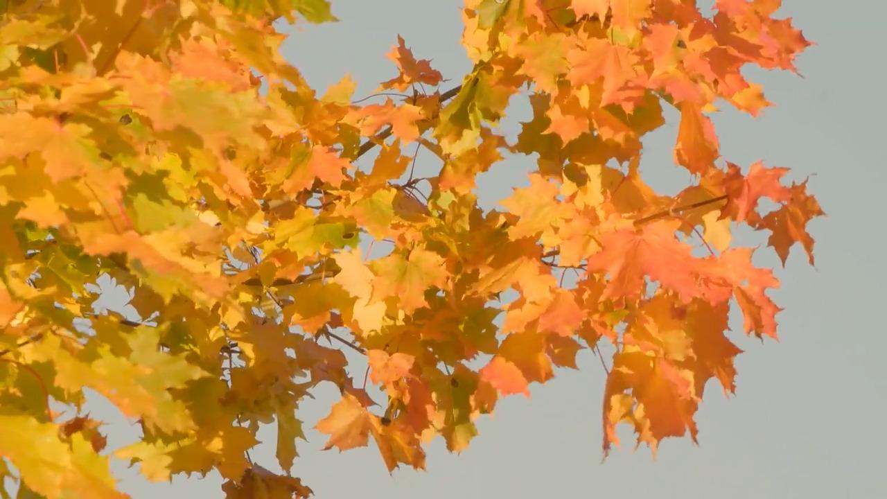 Den färgrika skogen – hösten och året