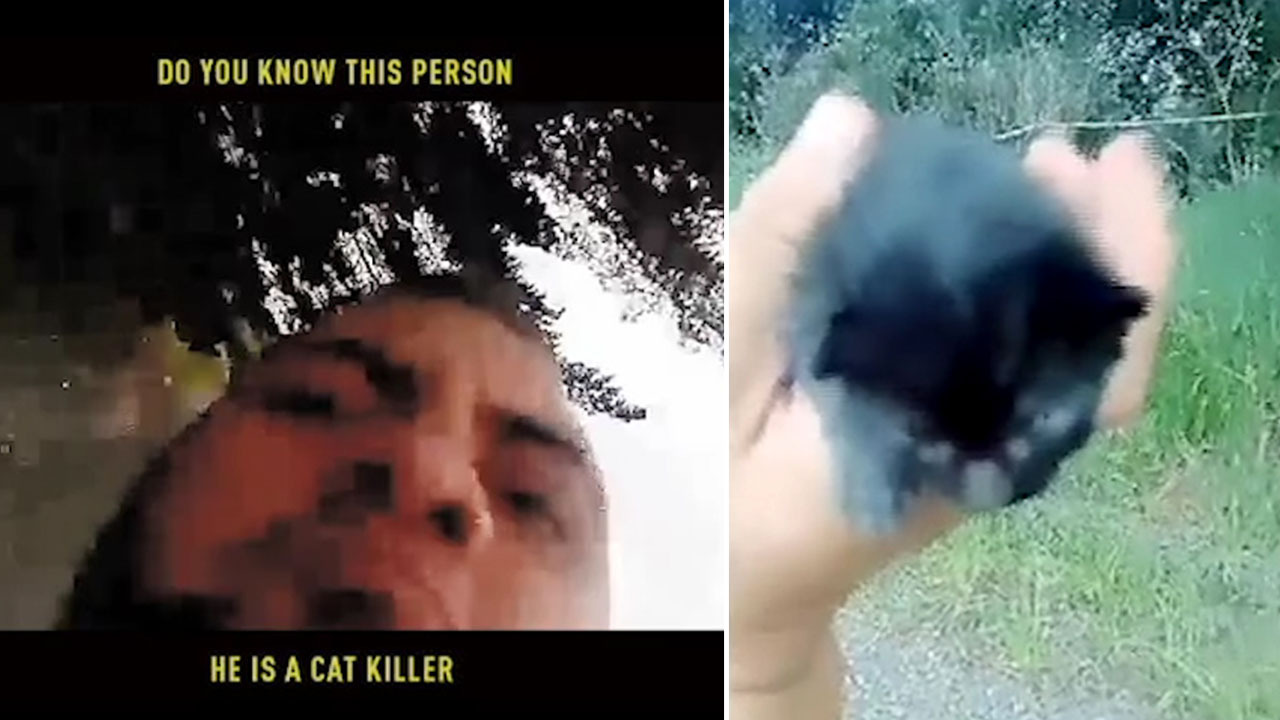 Thug 'stomps kitten to death' in horror video as the tiny