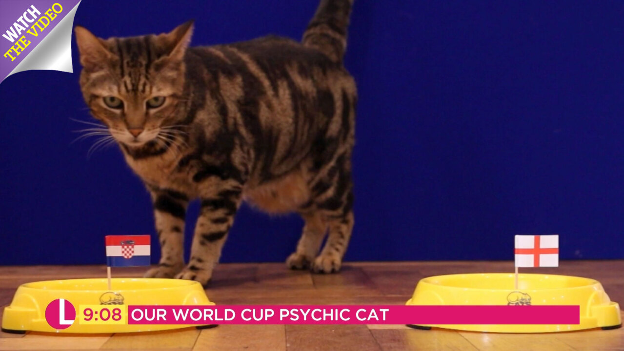 Pictures of the world cup winner 2020 predicting cat