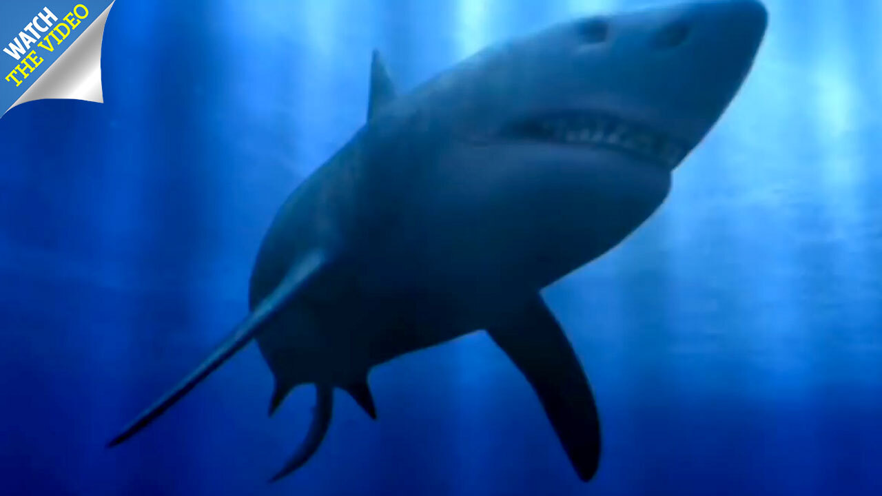 Ancient giant shark megalodon 'wiped out by massive supernova