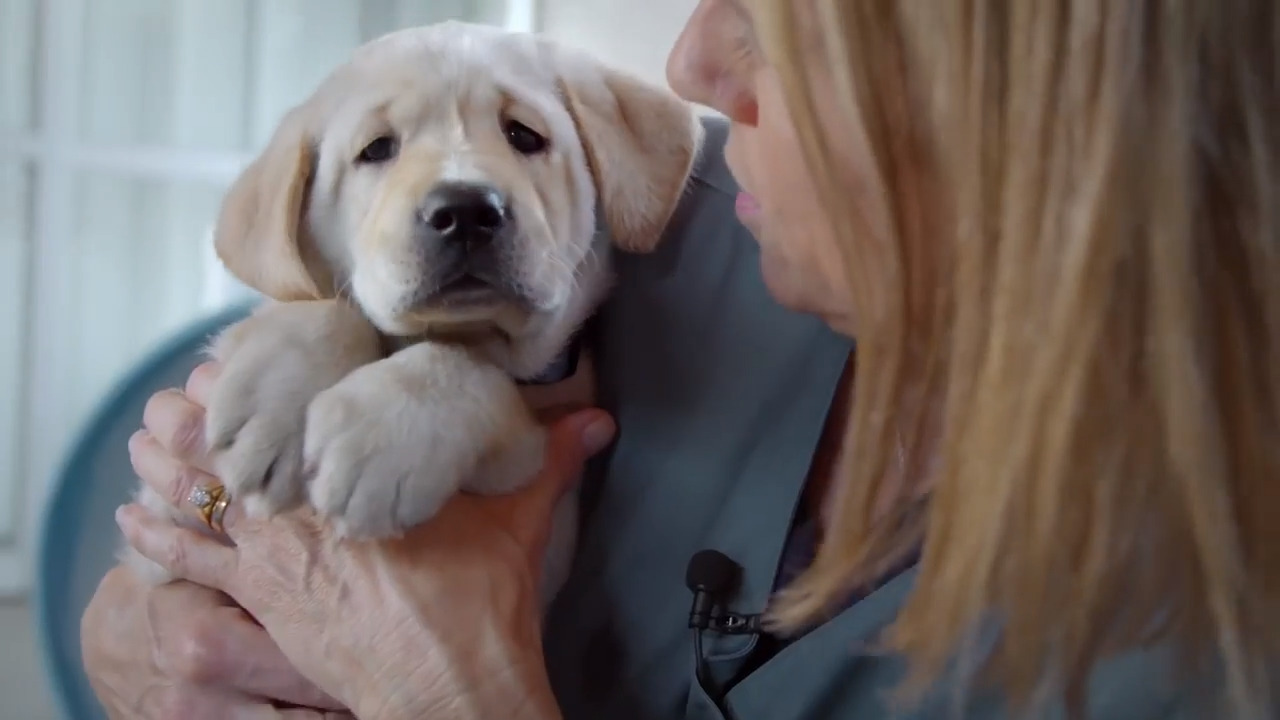 Netflix Guide Dog Film Pick Of The Litter Rated 97 Percent On Rotten Tomatoes