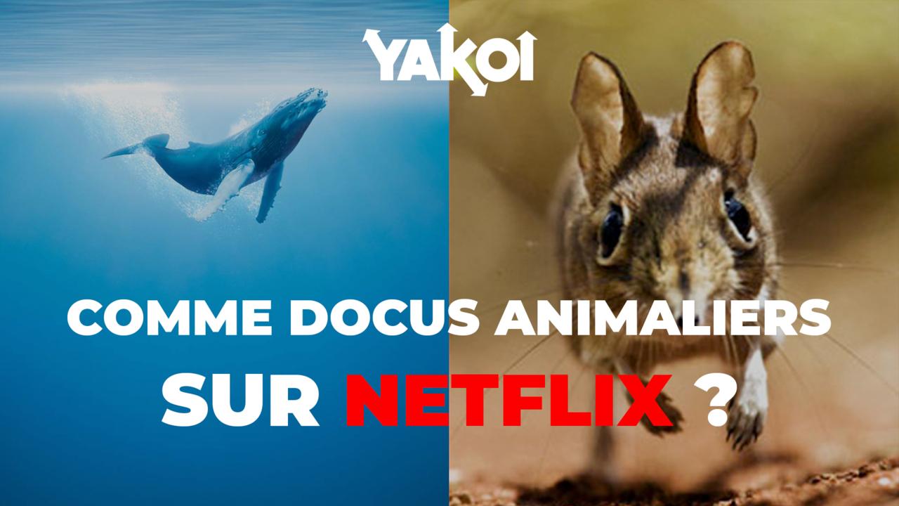 Yakoi : découvrez notre top 5 des documentaires animaliers sur Netflix !