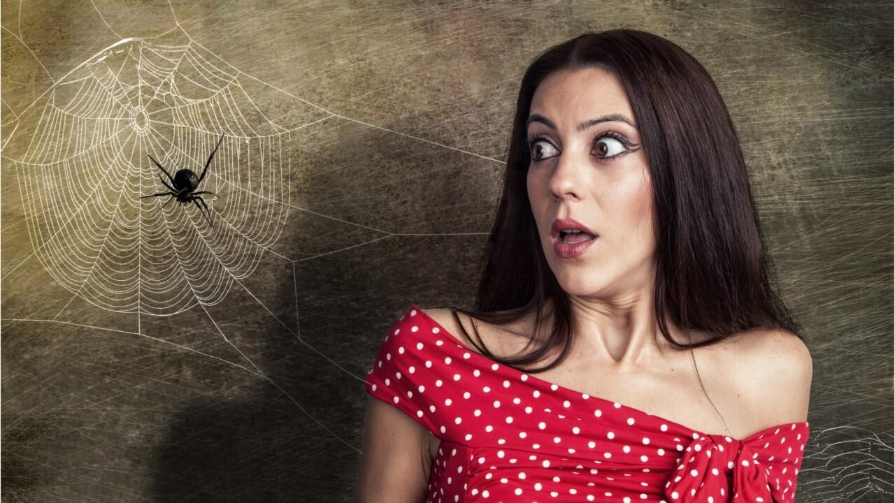 Faire Fuir Les Fourmis femme actuelle - les astuces géniales pour se débarrasser des araignées