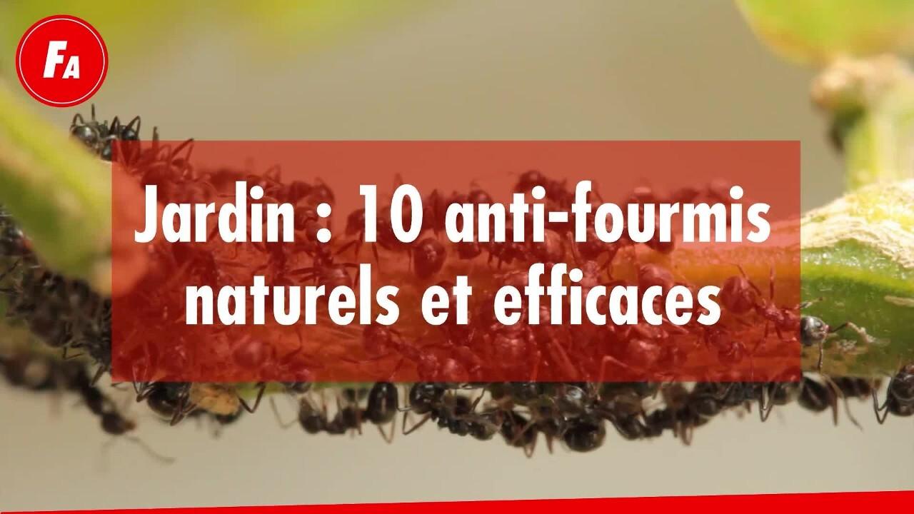 Astuces Naturelles Pour Se Débarrasser Des Fourmis femme actuelle - jardin : 10 anti-fourmis naturels et efficaces