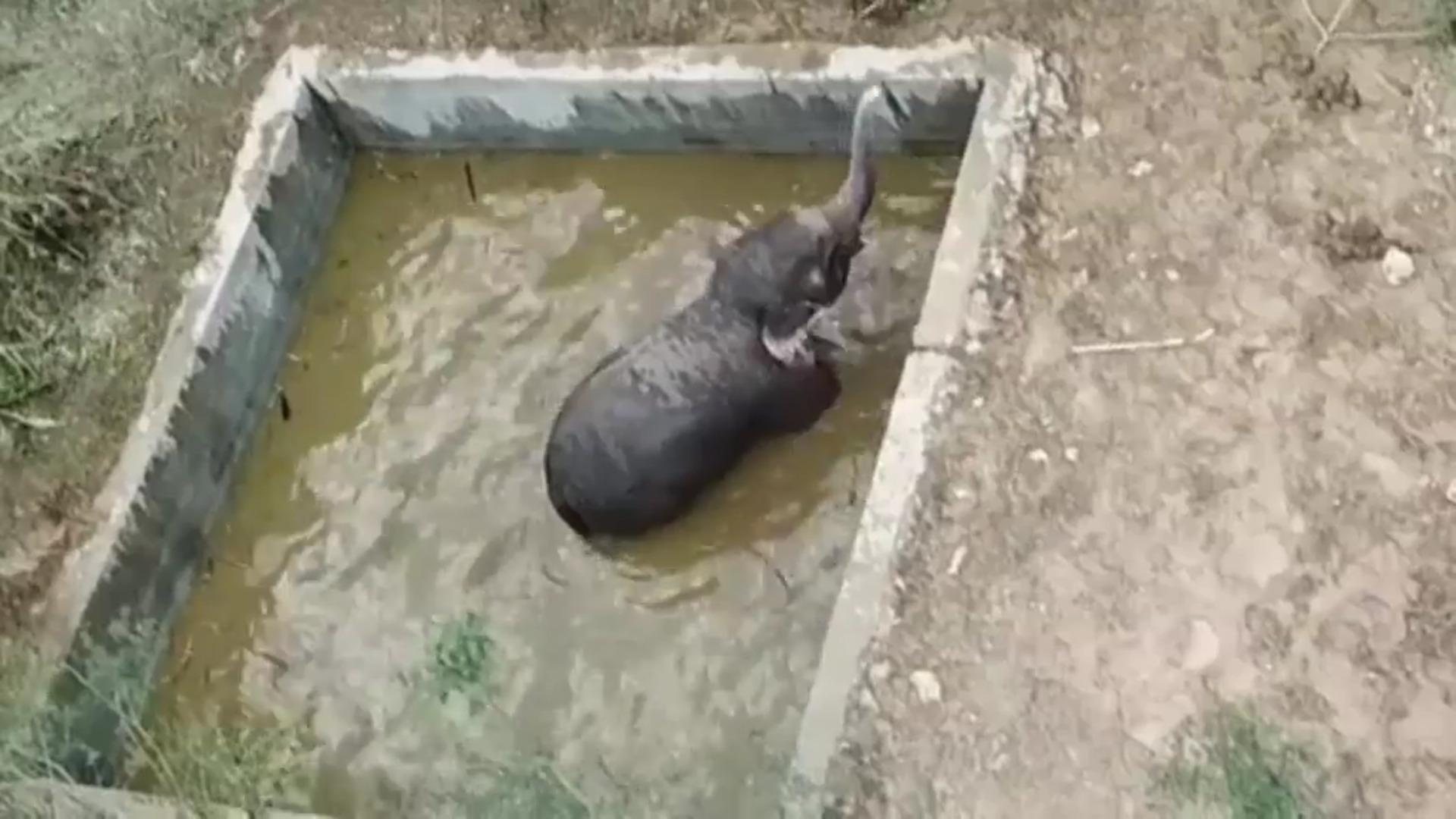 Rescatan a una cría de elefante de un estanque