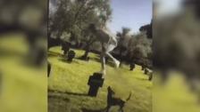Detenido por grabarse saltando sobre las tumbas del cementerio alemán de Cuacos de Yuste