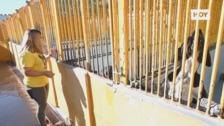 La perrera se quiere abrir a Badajoz