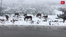 La nieve comienza a cubrir las cumbres asturianas