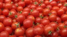 Santurde acogerá este verano el mercado de hortelanos