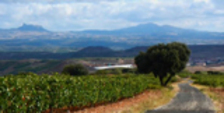 Ruta BTT: Dehesa de Navarrete, una isla de bosque entre un mar de viñedos