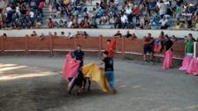Becerrada en Valsaín celebrada el 3 de septiembre de 2019