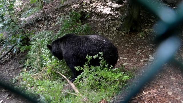 Ein Altenteil für Bären: Der Alternative Bärenpark Worbis