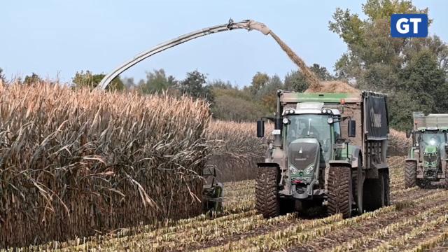 Maisernte für die Biogasanlage Rosdorf